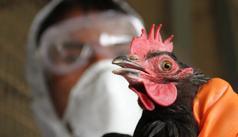 India reports first death from bird flu this year