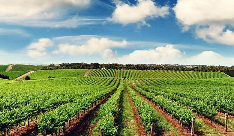Azerbaijan's agricultural sector grows by 5%